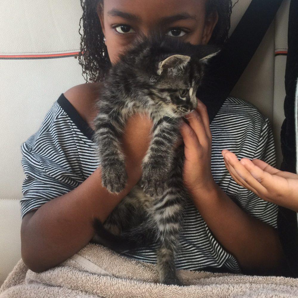 Thunder kitty
