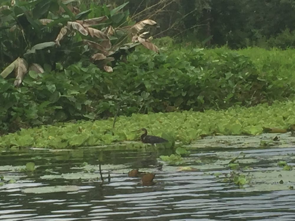 beautiful birds on Lake Nicaragua