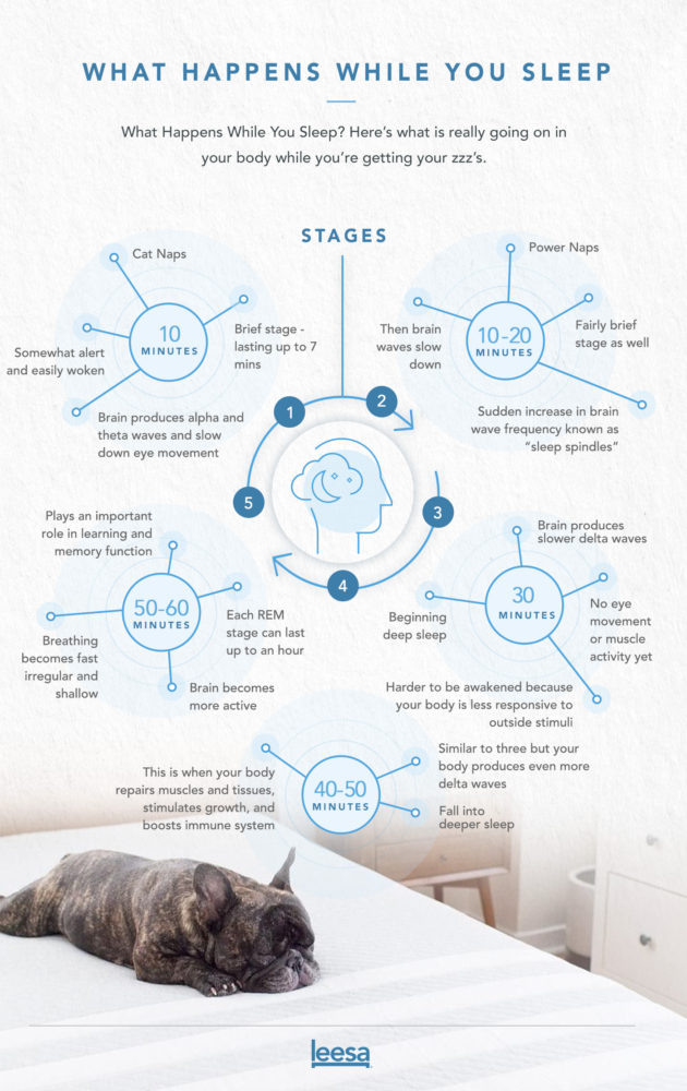 Leesa Sleep Cycle infographic